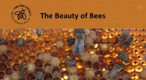 Einstein said we need to widen our circle of compassion to embrace all living creatures to encompass this he loved the beauty of bees.
