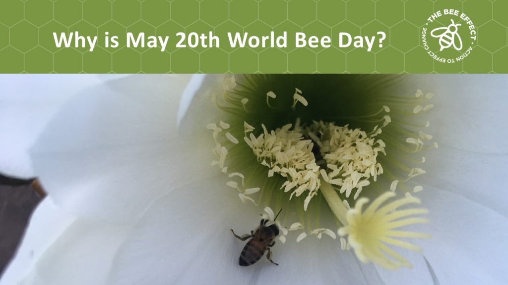 The 20th of May is a day of keen significance, and a day in which we are all tasked with celebrating our bees and raising awareness for the critical role they play in the world.