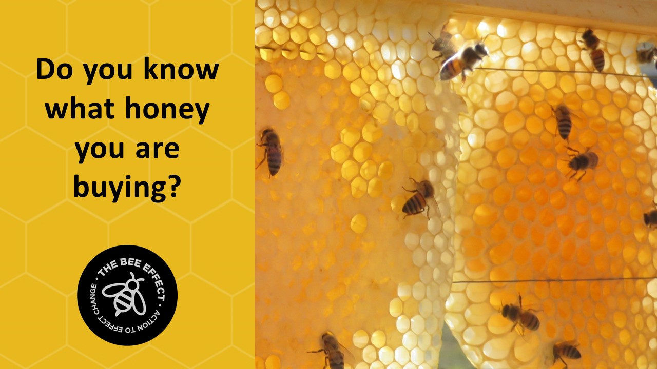South Africa imports over 3000 tonnes of honey per annum, selling under familiar brands, with ingredients listed as'honey'.What honey you are buying?