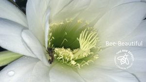 Check out our honey bee gallery and loose yourself in pictures that take you right into their world. Bee Beautiful pictures on flowers and in hives.