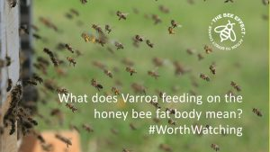A new study by Samuel Ramsey debunking the assumption that Varroa feed on honey bee hemolymph, concluding that they feed on the fat body.