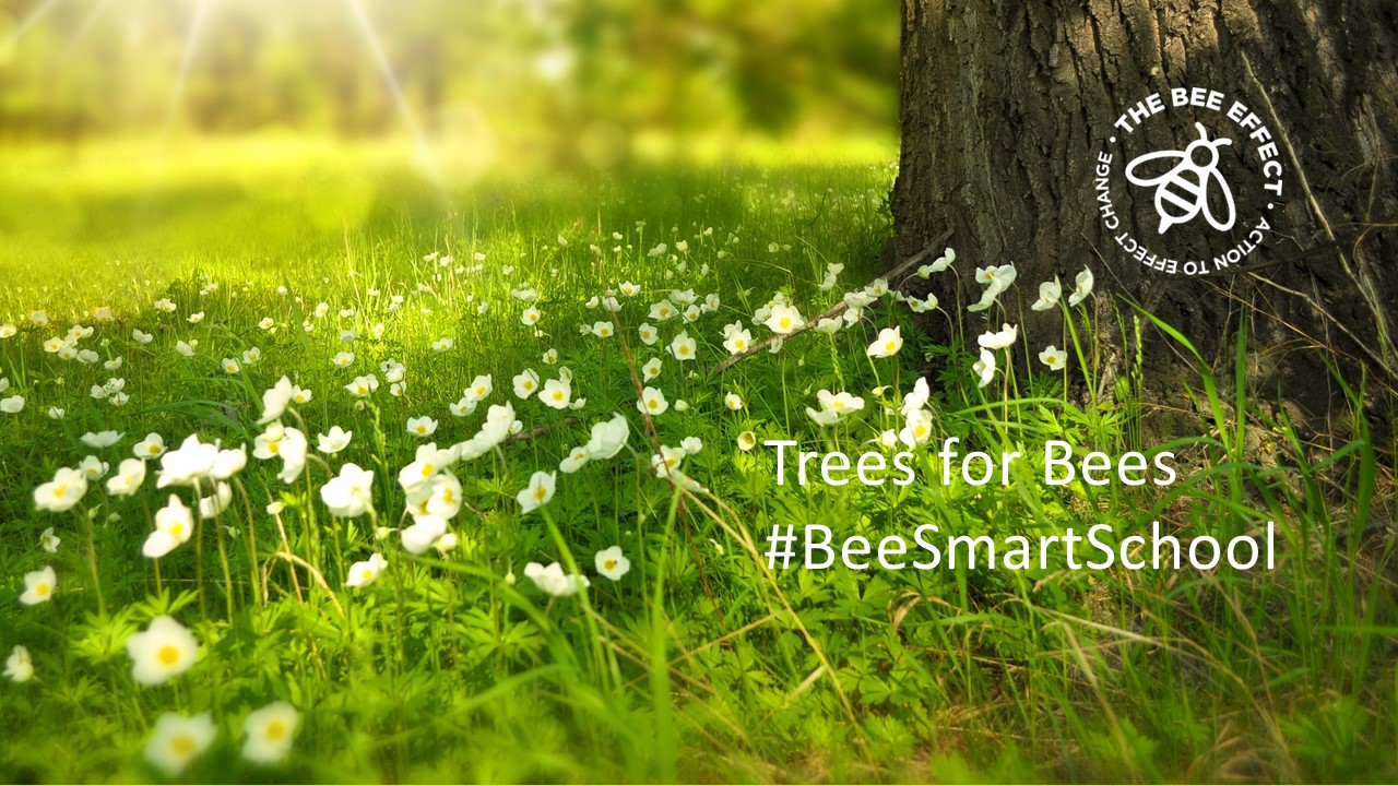Trees for Bees #BeeSmartSchool