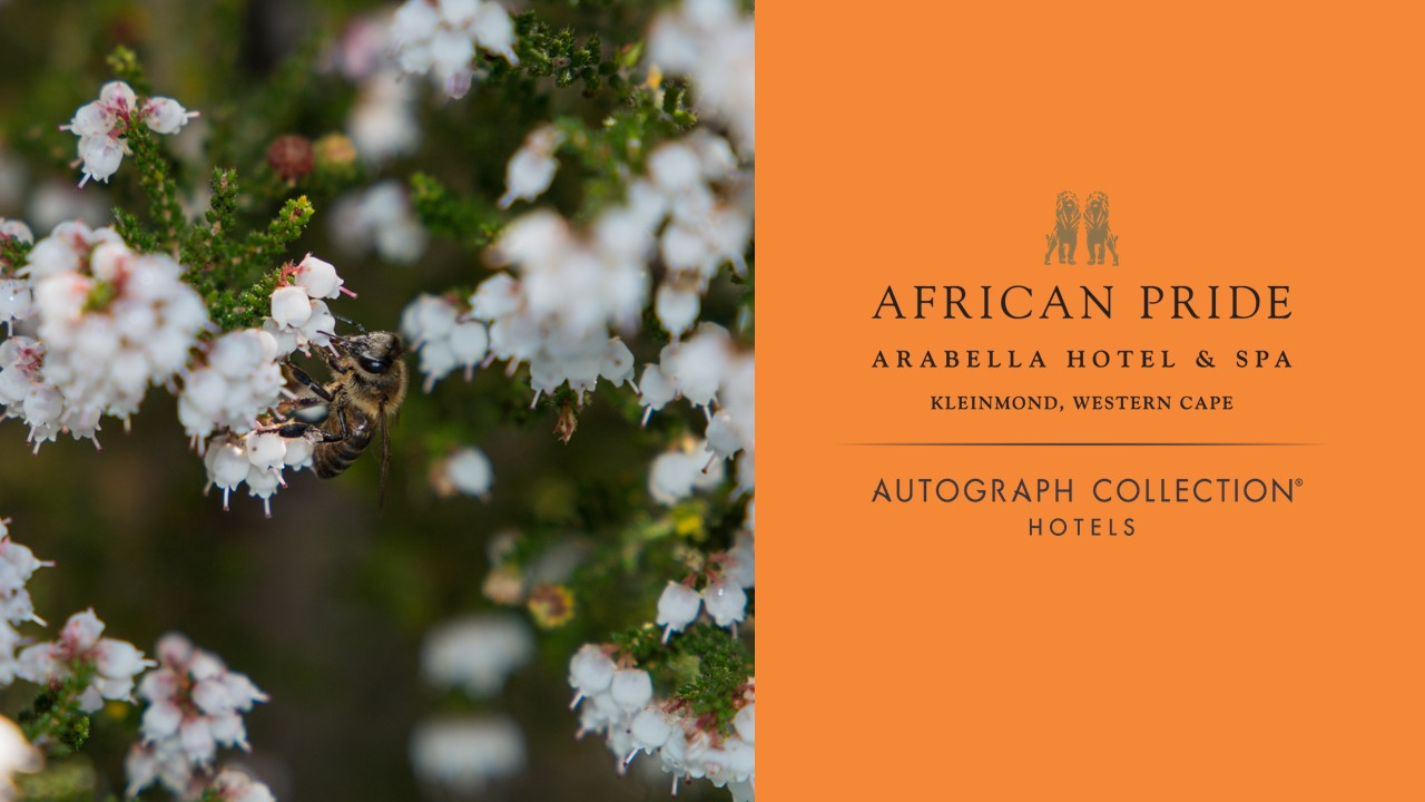 The Bee Effect welcomes the African Pride Arabella Hotel & Spa to our hive with their commitment of 70 hectares of land to home honey bees.