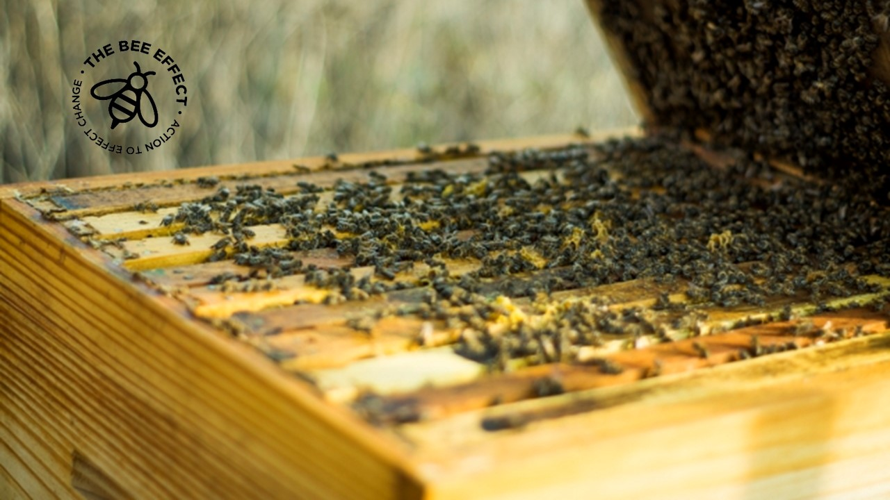 To save honey bees we need to design them new hives