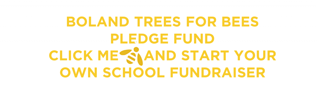 Boland Trees for Bees Pledge Fund_The Bee Effect
