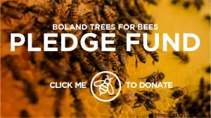 Donate or start your own fundraiser for The Bee Effect Boland Trees for Bees Fund supporting Greenpop reforestation projects.