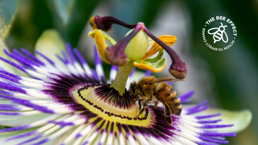 What flowers do honey bees visit? Check out our Good Bee Food with Beekeepers Choice and don't miss the Growing Your Garden Buzzy section for garden lovers!