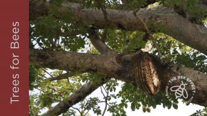 Trees for Bees_National Arbor Week 2020_The Bee Effect