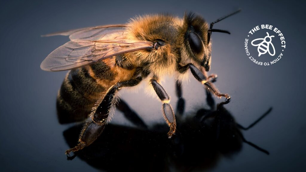 A recent project research has yielded the first direct chemical evidence for honeybee product exploitation in West Africa.