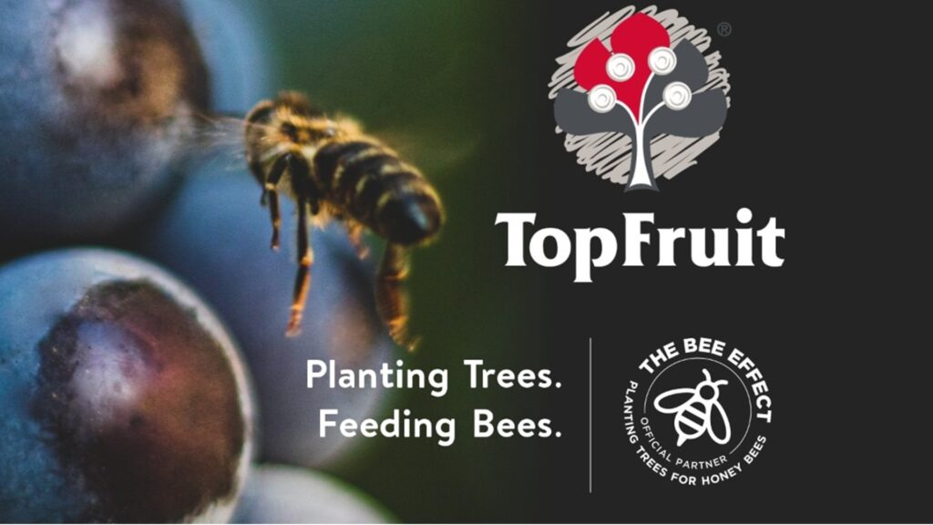opFruit-joins-or-hive_The-Bee-Effect